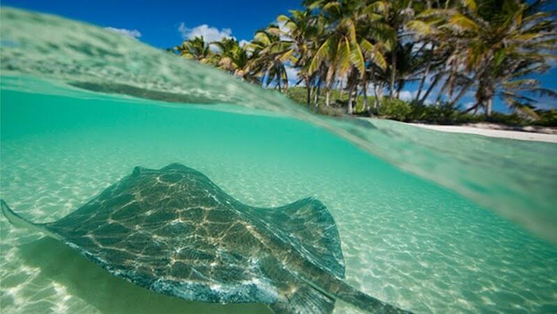 Isla Contoy: Un paraíso poco conocido.